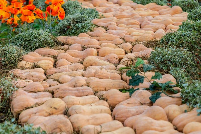 Path pumpkin art design road ozz poppies orange vegetable background pattern stock photography