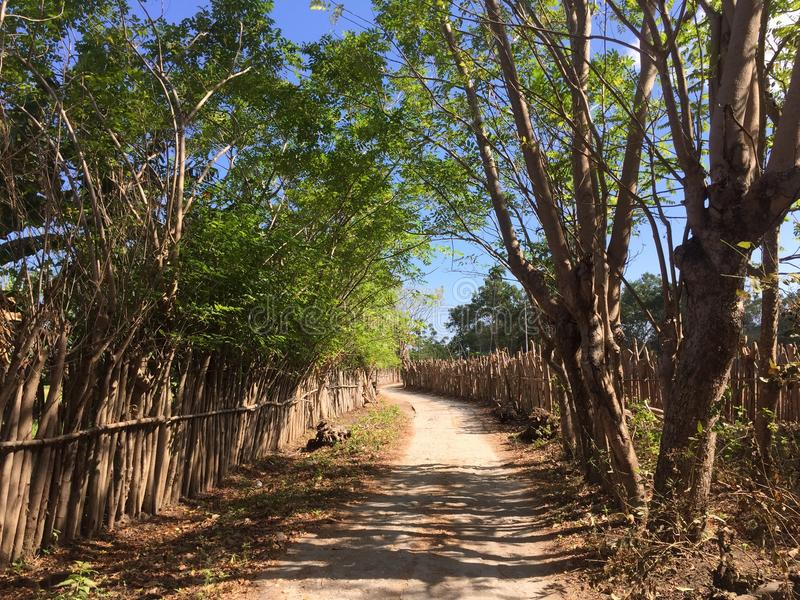 A path between rice fields on Sumbawa stock photography