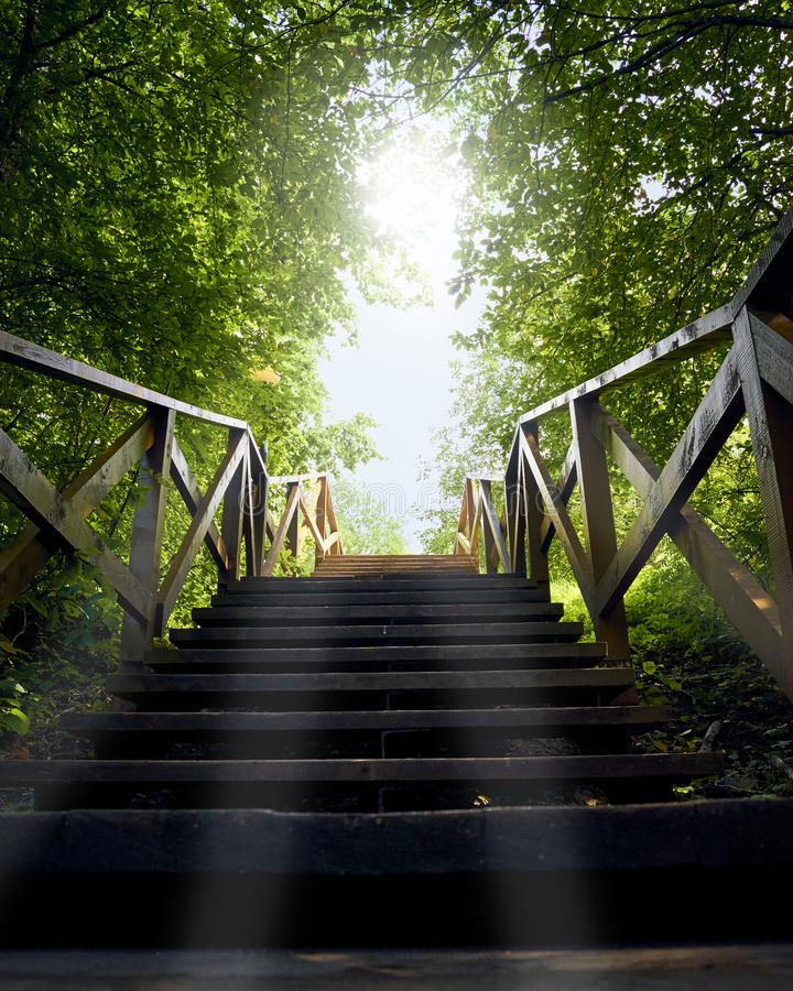 Path, road from darkness to light, blue sky, a wooden ladder among trees, summer stock photo