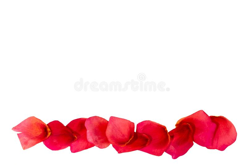 Path of rose petals. Red rose. Path of rose petals. Petal. Red rose. Set of blades for the design. Isolate on white stock images