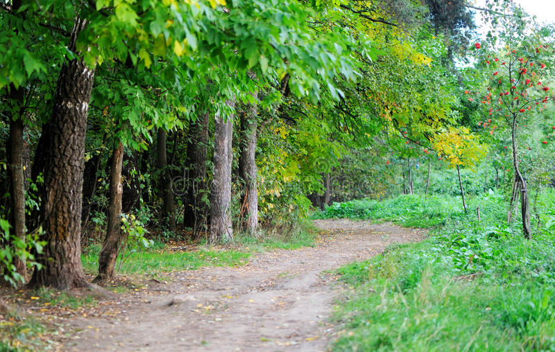 A path running through autumnal forest. A path running through green and yellow autumnal forest royalty free stock photography