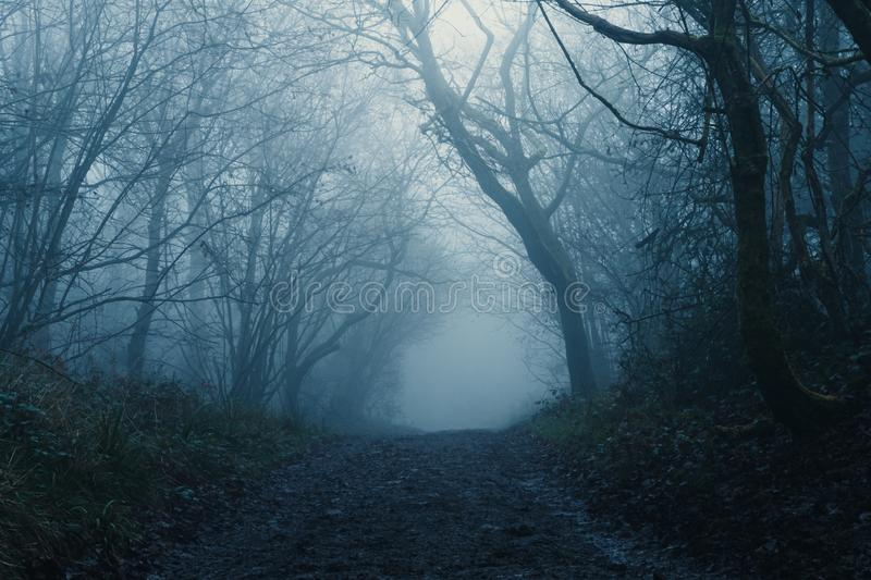 A path through a scary forest on a moody, dark, foggy, winters day.  royalty free stock images