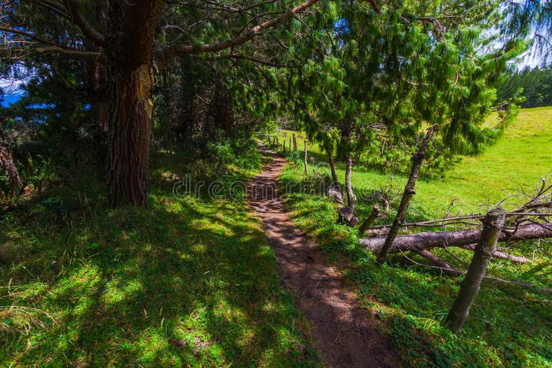 Path in the shade some pine trees. Path of earth that runs in the shade some pine trees stock image