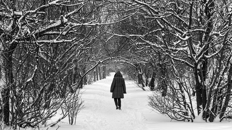 Path through the snow. A walking in the park. Photo manipulation with my own photos royalty free stock photos