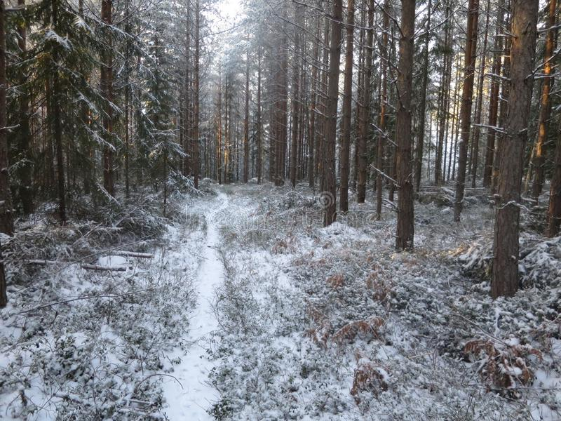 Path in snowy forest royalty free stock photos