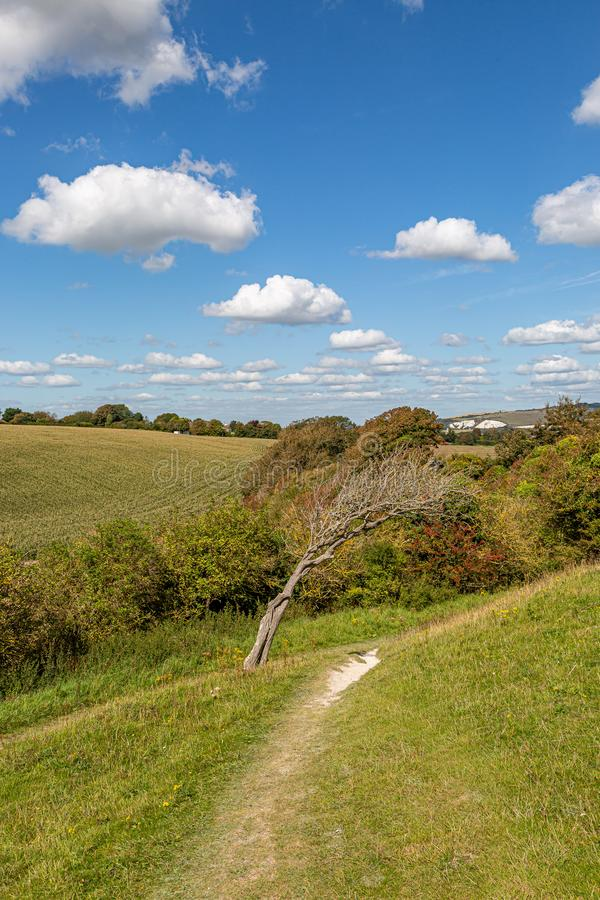 A Path in the South Downs in Sussex. A chalk pathway in the South Downs in Sussex, on a sunny late summers day royalty free stock image