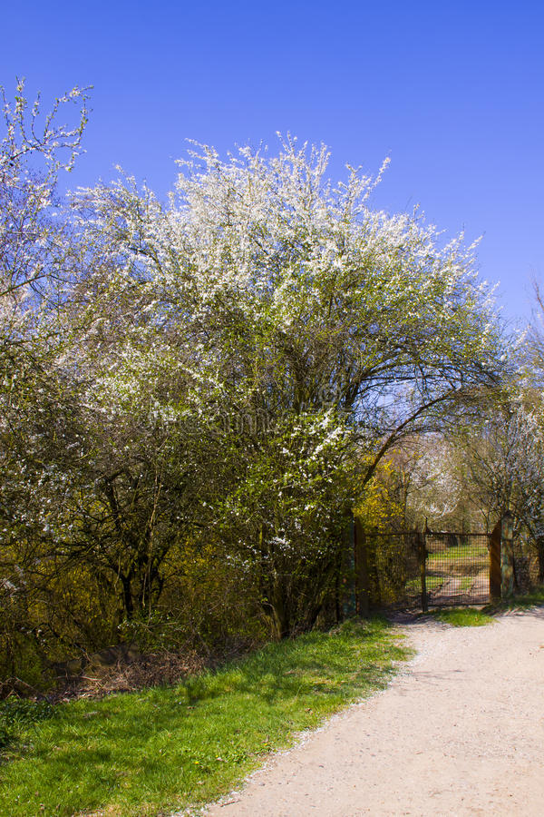 Path in spring countryside
