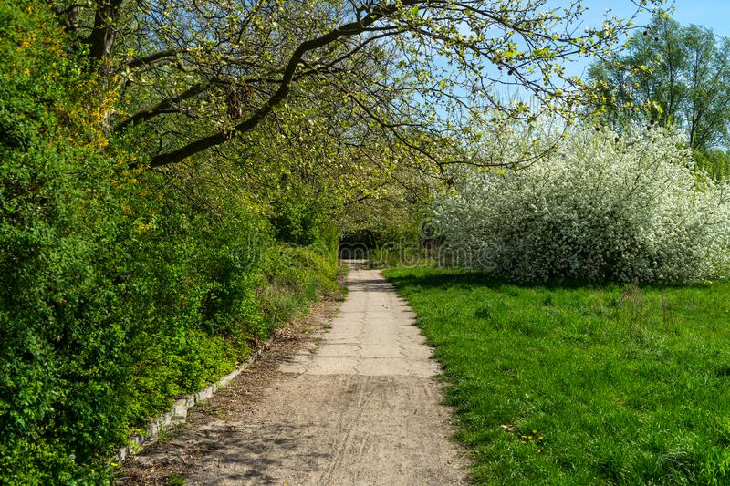 Path in the spring park. stock photos
