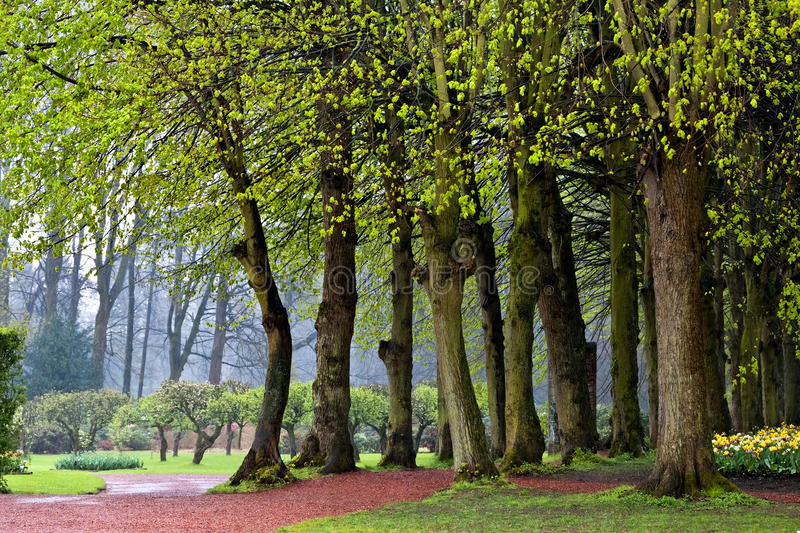 The path in the spring park. After the rain. stock images