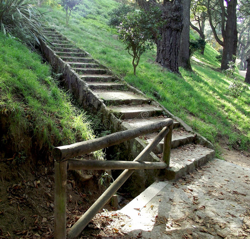 Path of stairs in pine forest. In autumn stock photography