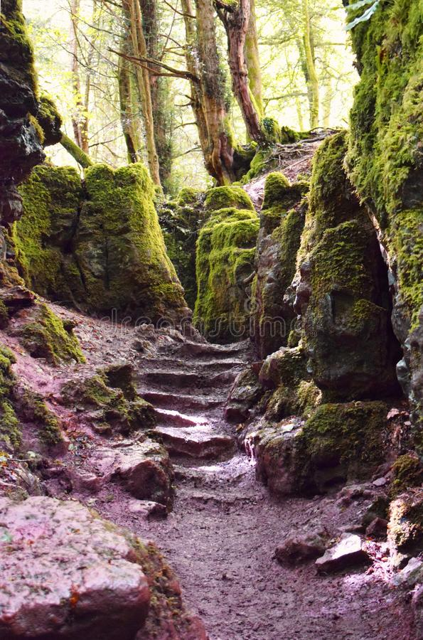 Path and steps in a green forest. Pathway and steps weaving between mossy rocks in Puzzlewood in the UK royalty free stock images