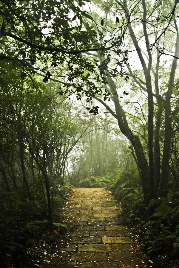Path and steps in a misty mystical forest stock photos
