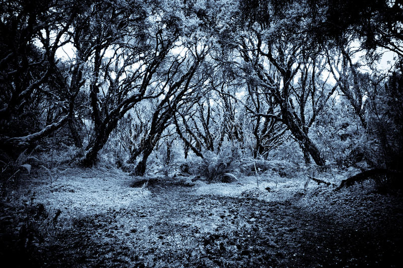 Download Path In A Strange Dark Forest Stock Image - Image of ghost, evil: 26860923