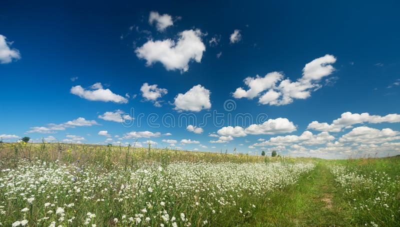 Summer field covered with flowers royalty free stock photos