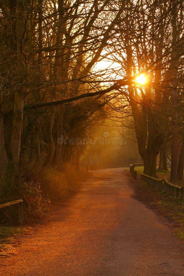 Path at sunrise A