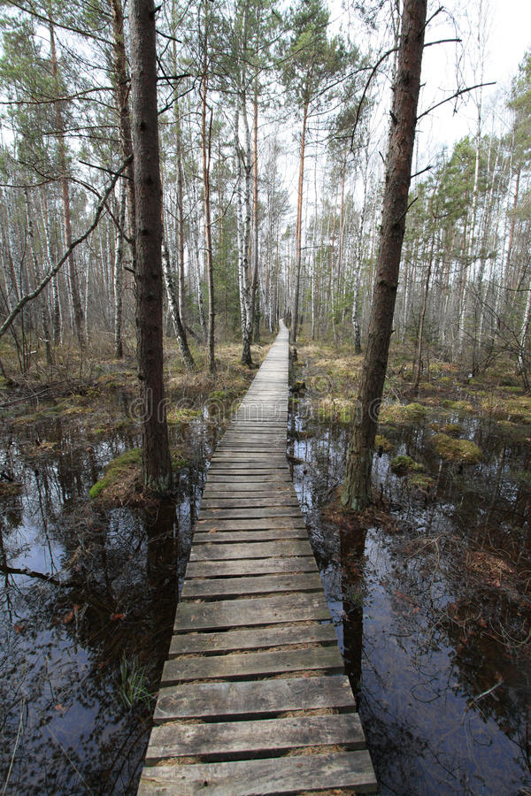 Path in the swamp. A wooden path in the swamp royalty free stock image