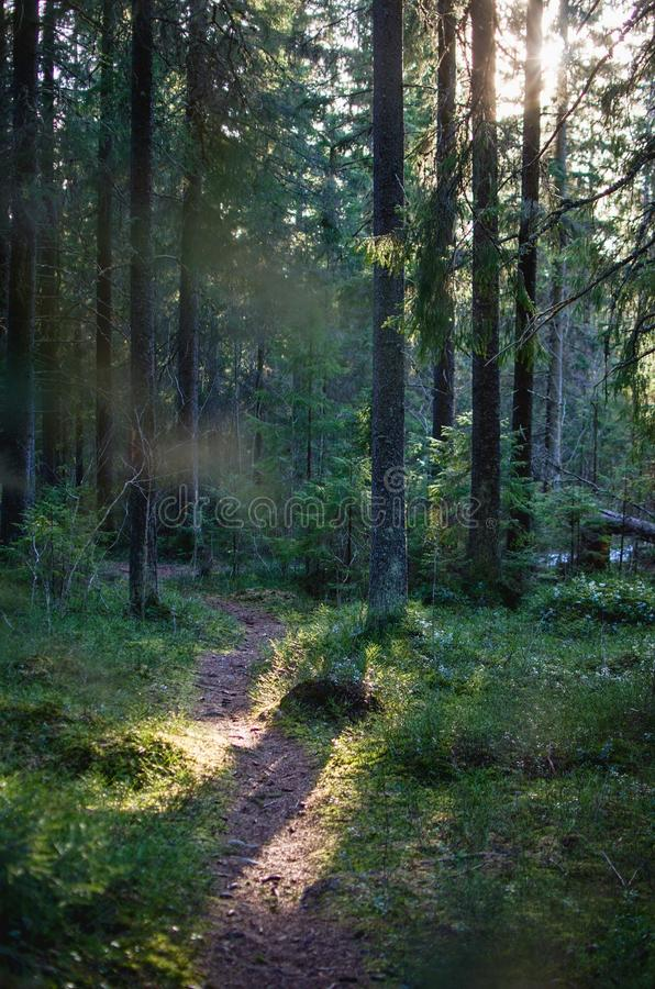 Path in Swedish Forest by Sunset stock photo