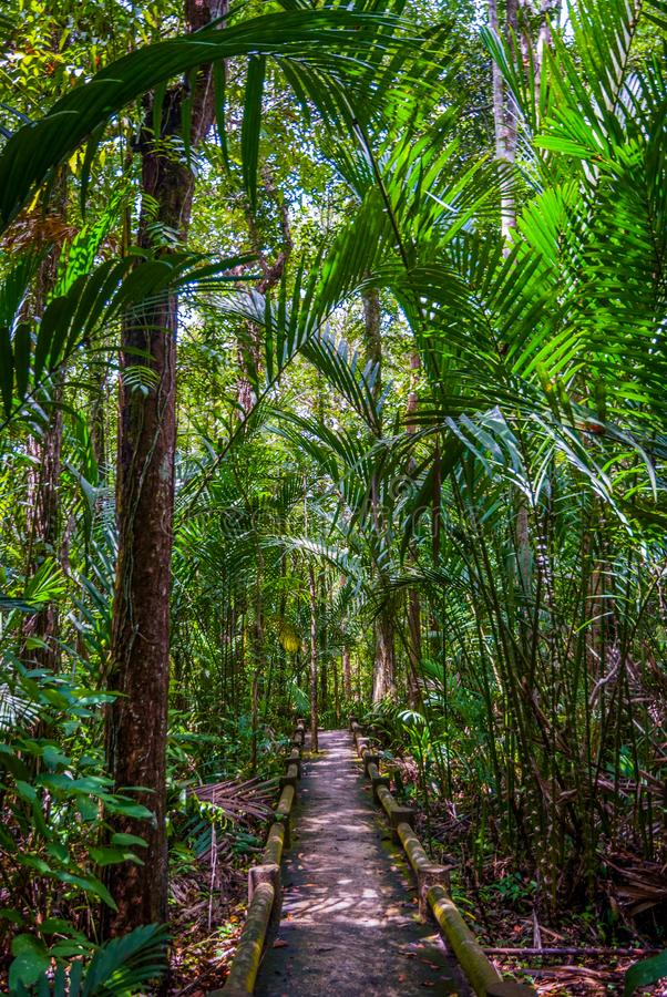 Path thru the jungle forest, Thailand. Path thru the jungle forest, Koh Lanta, Thailand nature tree green travel wood tropical park trees sky summer outdoor royalty free stock images