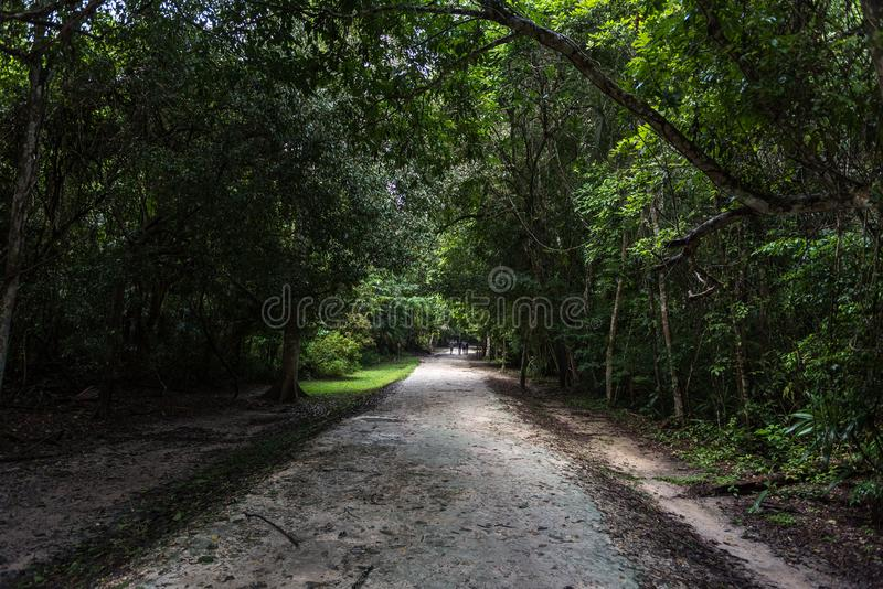 Path in Tikal Park. Sightseeing object in Guatemala with Mayan Temples and Ceremonial Ruins stock photo