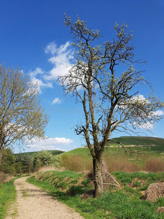 Path to the Arkenberge hill, the highest raising in Berlin. The Arkenberge in Blankenfelde in the north of Berlin was originally a natural range of hills. By stock image