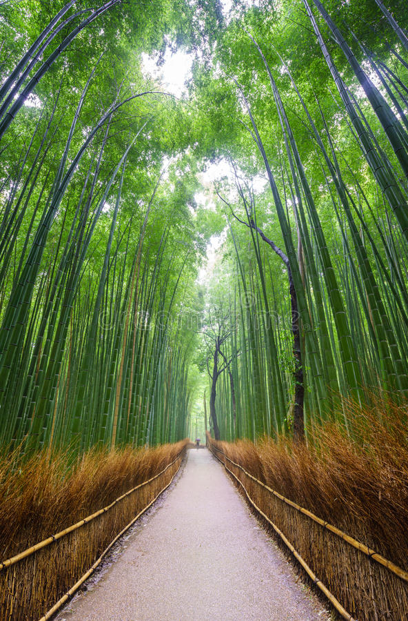Path to bamboo forest, Kyoto, Japan royalty free stock photography