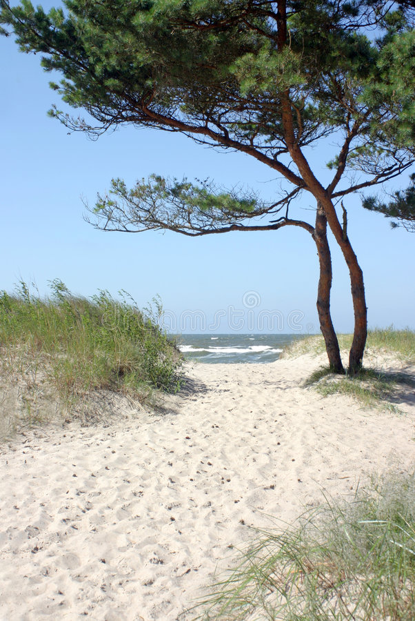 Path to the beach. Sandy path to the beach with pine tree and horizon over sea water royalty free stock photos
