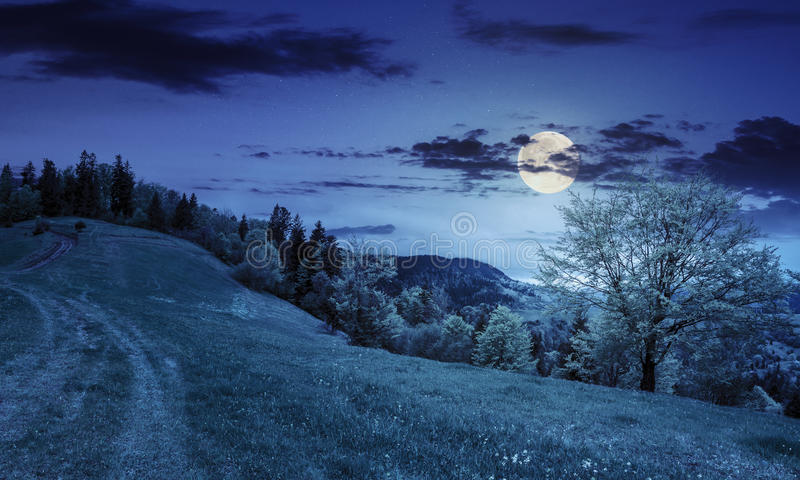Path to forest in mountains at night royalty free stock images