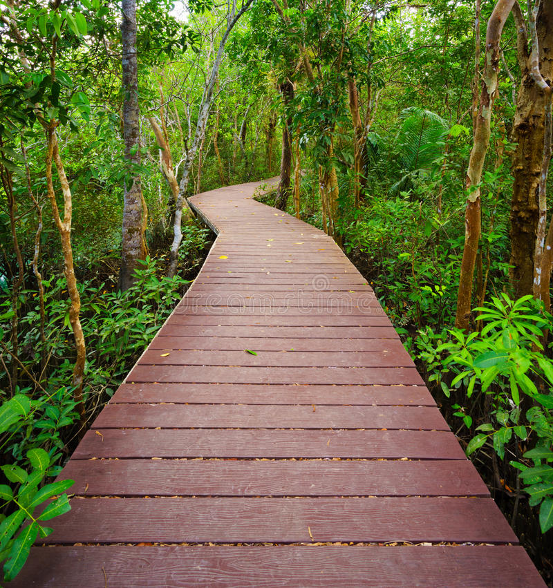 Path to the jungle,Trang,Thailand. Wooden bridge to the jungle, Tha pom mangrove forest, Krabi,Thailand stock images
