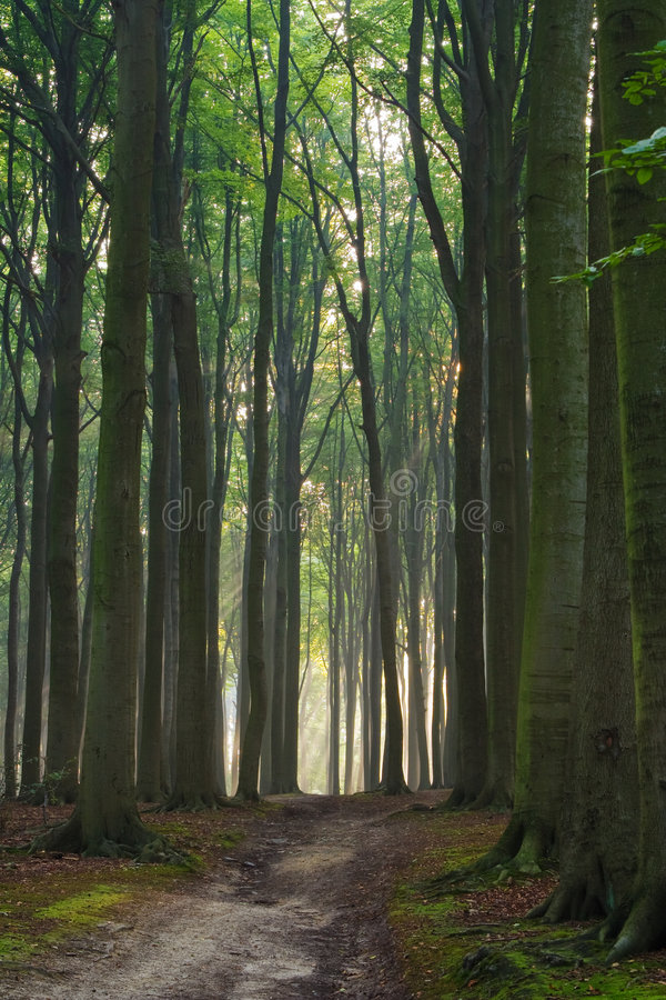 Download Path to the light stock photo. Image of leaf, beams, filtered - 7644218