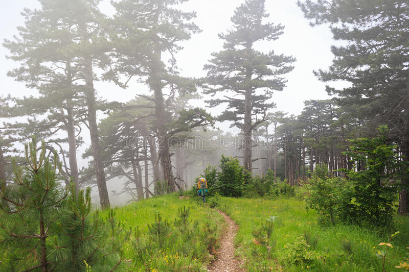 Path to the mystery. Lone traveler with backpack walking along a trail to beautiful mysterious foggy forest under dull sky with green grass and flowers on the stock photography