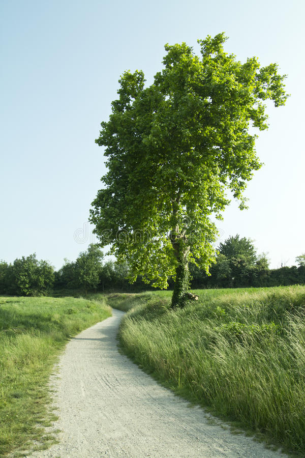 Free Path To Nature Royalty Free Stock Image - 41902006