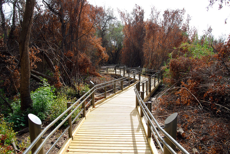 Download A path to nature stock photo. Image of travel, reservation - 7521722