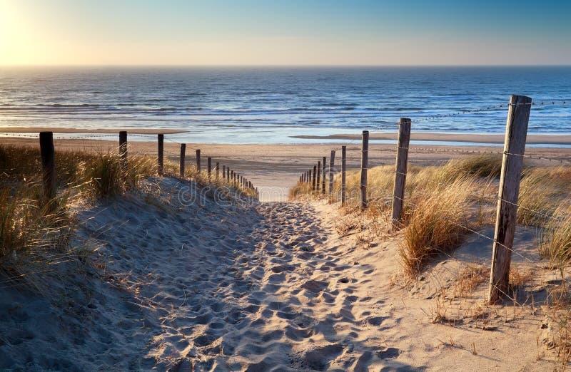 Path to North sea beach in gold sunshine stock photos