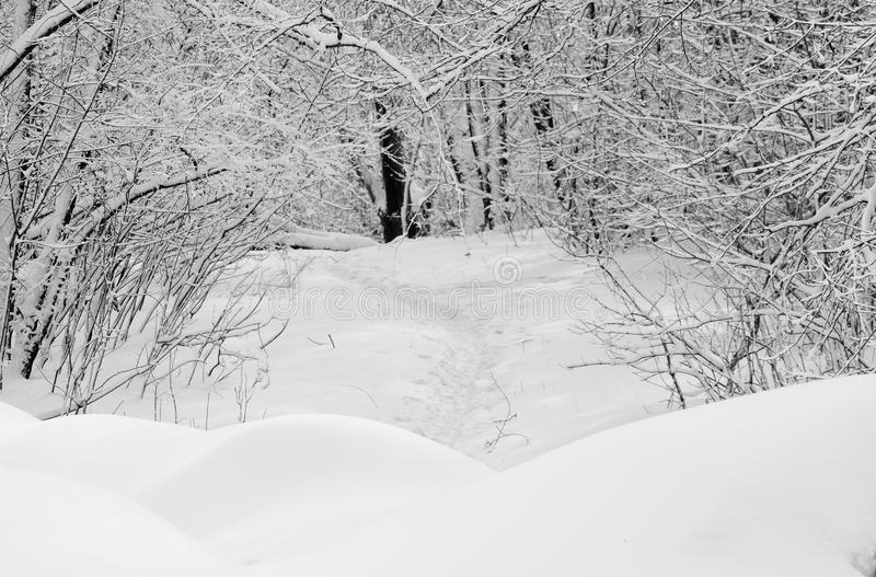 Path to nowhere in winter park. royalty free stock photography