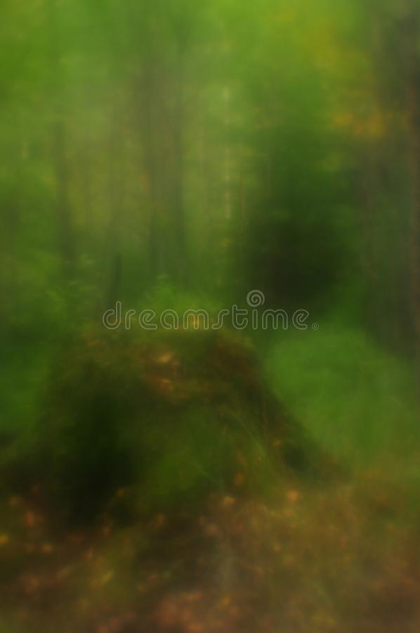 The path to the overgrown stump stock images