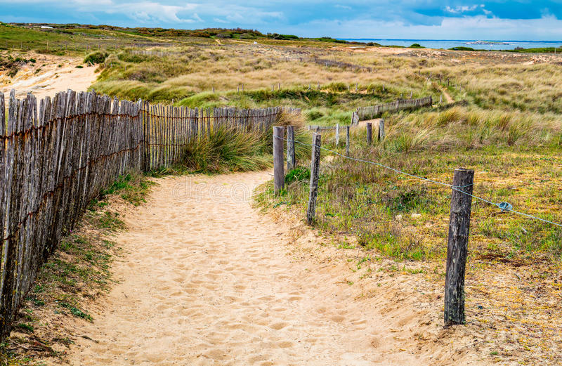 Path to sand beach with beachgrass. Way to the wide sandy beaches of the Atlantic. stock photo