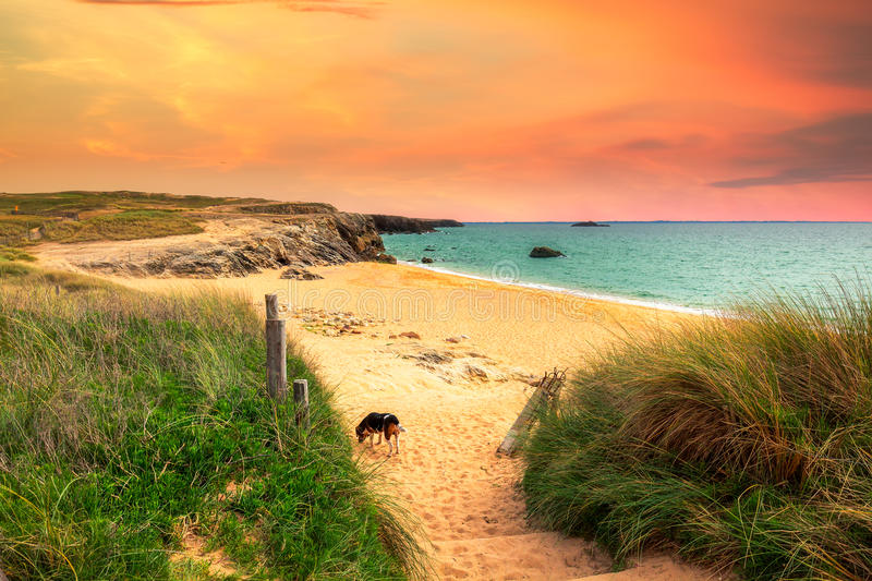 Path to sand beach with beachgrass. Way to the wide sandy beaches of the Atlantic. stock image