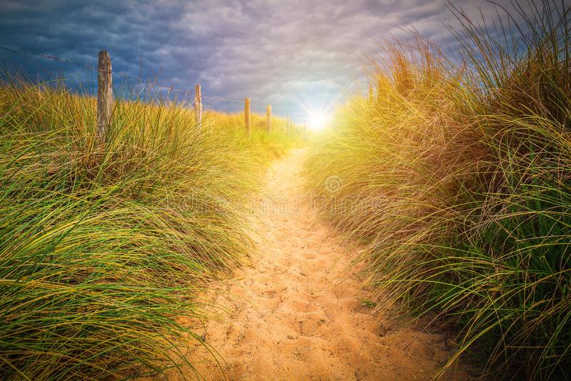 Path to sand beach with beachgrass. Way to the wide sandy beaches of the Atlantic. royalty free stock image