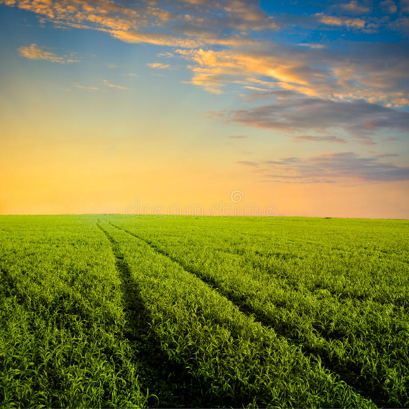 Download Path To The Sunset Stock Photography - Image: 12544332