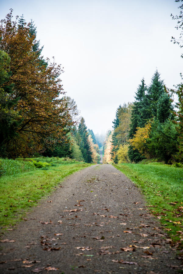 The Path Less Traveled royalty free stock photos