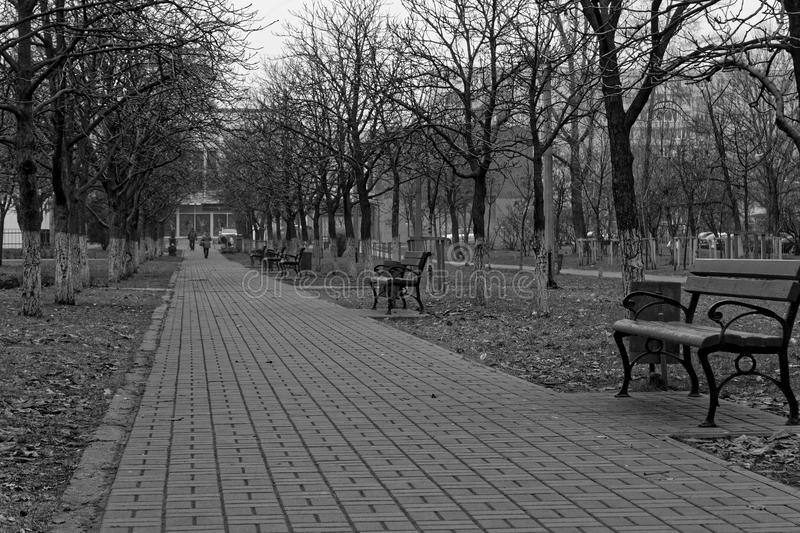 Path with trees and benches in a park, good for background, monochrome colors. Path with trees and branches in a park, good for background, monochrome colors royalty free stock photos