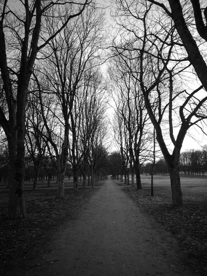 Path with trees. Path trees path in black and white in spring. taken in a park in Norway. the trees form a straight line to the end of the dirt road stock photos