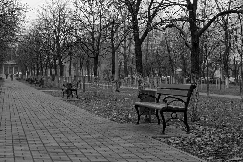 Path with trees and benches in a park, good for background, monochrome colors. Path with trees and branches in a park, good for background, monochrome colors stock photos