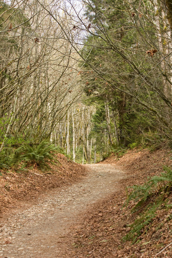 Path through Trees of Forest stock photography