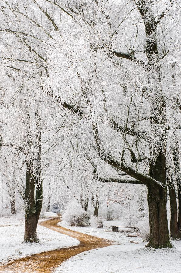 Path through trees with frost stock photos