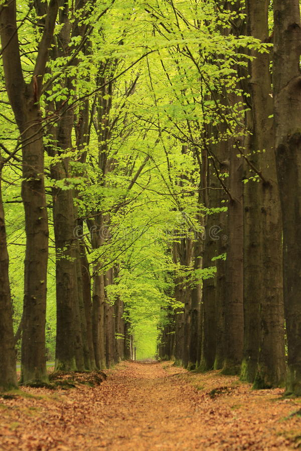 Download Path With Trees With Green Spring Leaves Stock Photo - Image of green, fresh: 19311796