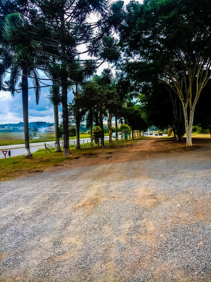 Path of trees. In Brazil stock image