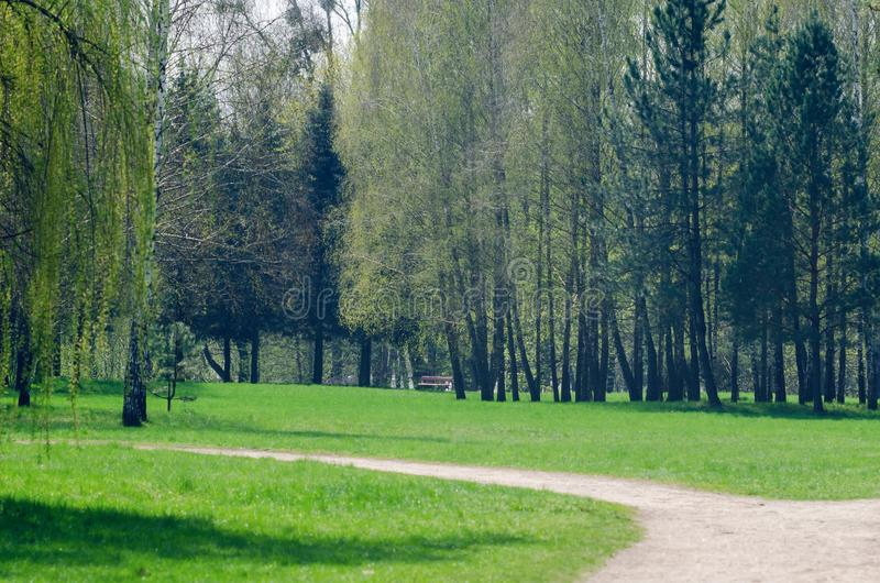 Path between trees in spring city park.  stock photos
