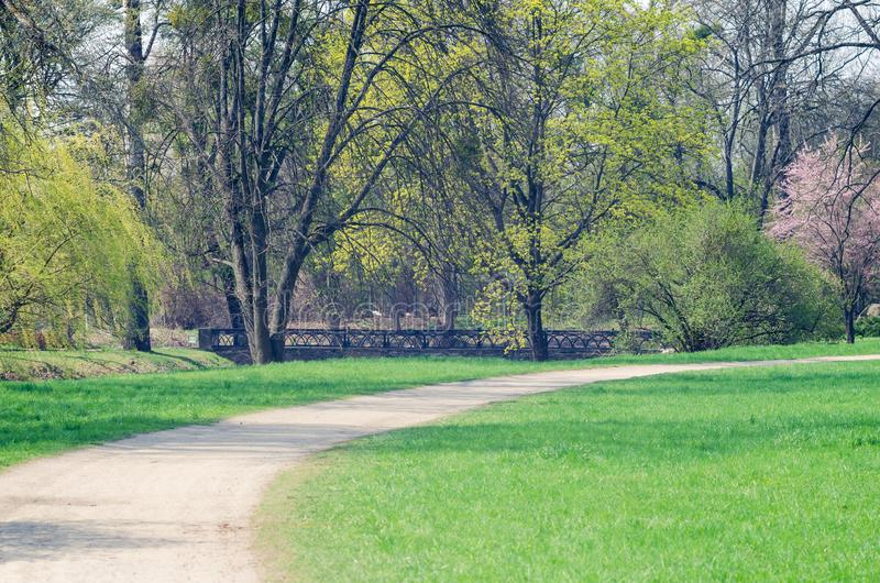 Path between trees in spring city park.  royalty free stock images