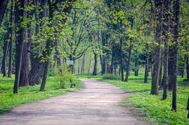 Path between trees in spring city park.  royalty free stock photography